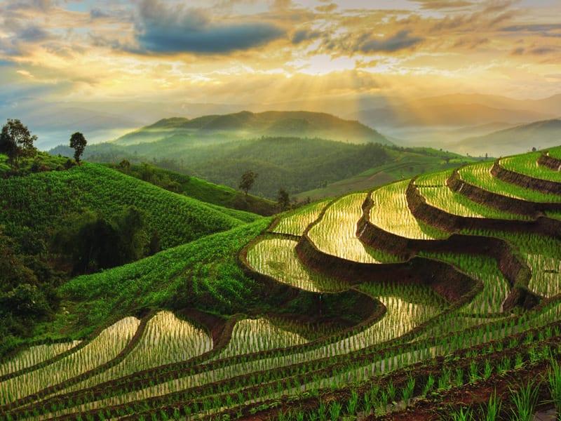 Eksport do Tajlandii
