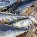Firma transportująca tuńczyka w rękach globalnego gracza!